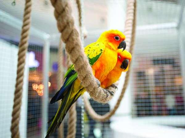 Exposition de perroquets